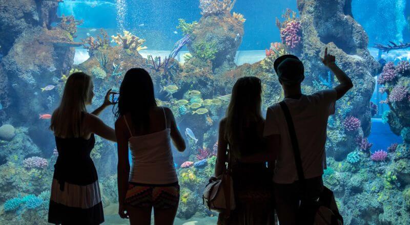 WEP – Cours d'anglais avec activités à Msida