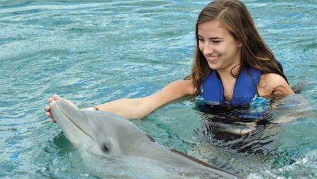 Séjours Cours et Activités option Nagez avec les dauphins
