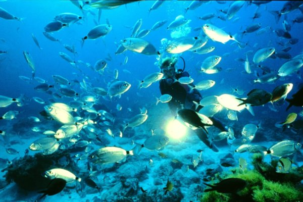 Malte, meilleure destination plongée au monde !